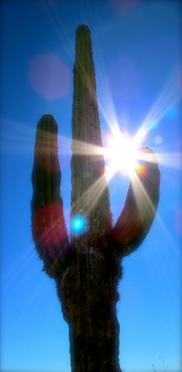 This is a cactus. Potentially painful to pee on.
