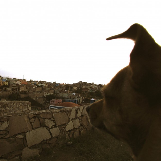 Me, taking in the view of Guanajuato