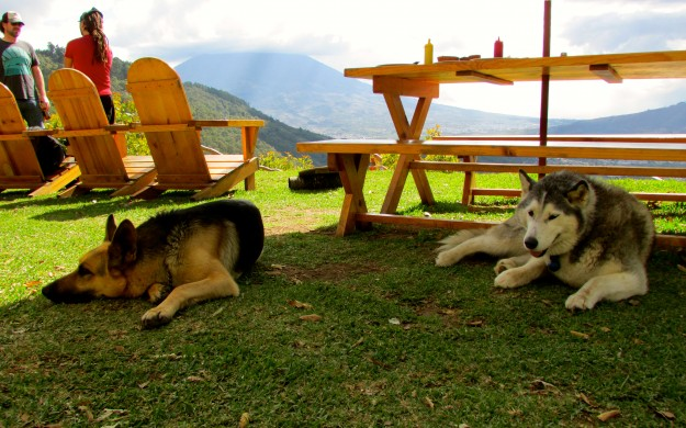 Earthlodge dogs. The dogs in Guatemala seem to have it pretty good, they look way happier than the dogs we met in Mexico.