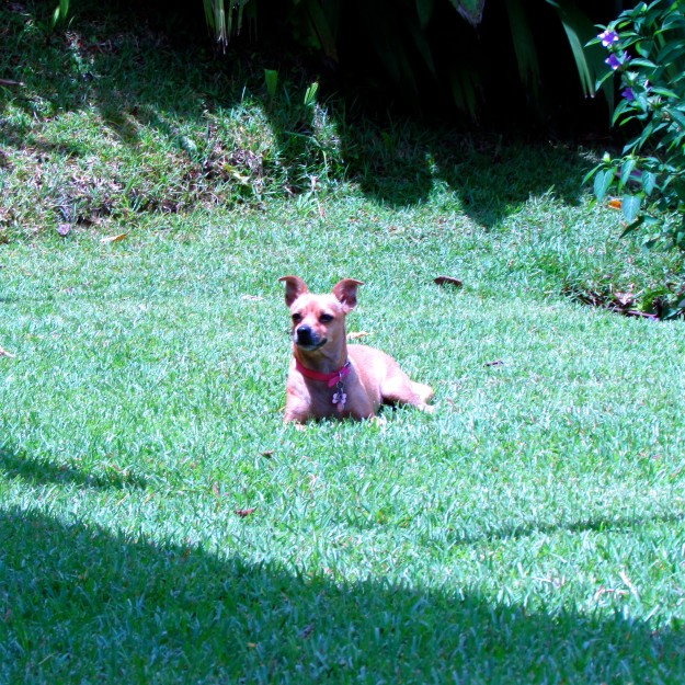 Me, enjoying the grass during the last few days in the Big Jungle House.
