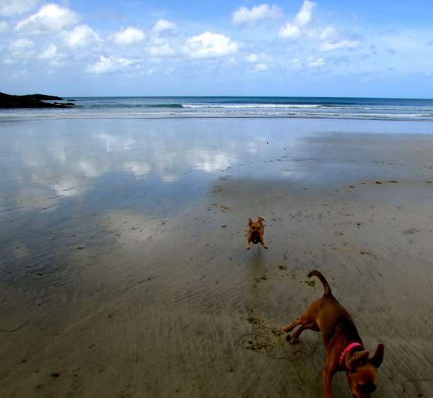 I could chase Maya on the beach all day.  Luckily, she seems to like being chased!