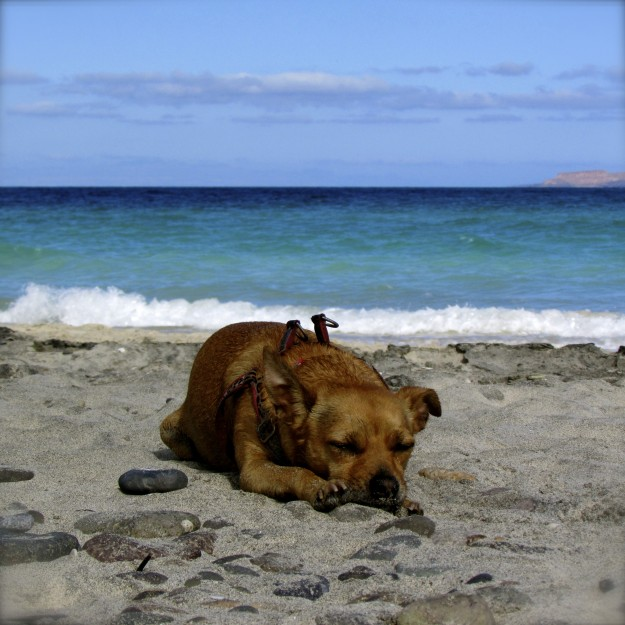 Napping on the beach is one of my favorite things to do!