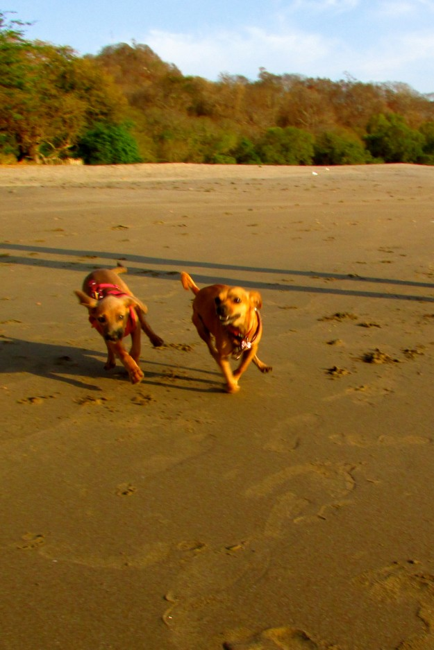 Maya finally got big enough to join me on beach run in Playa Gigante, Nicaragua. Here we are tearing it up together.
