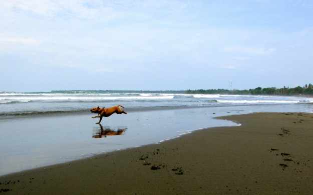 Me running on the black sand beach in Cahuita, Costa Rica.  Note to self:  Black Sand gets way hotter than white sand.  Ouch!