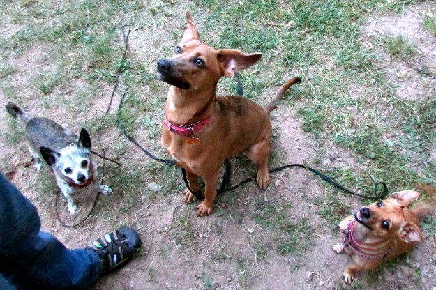 Ducati, Maya and I waiting for treats. Our Humans love making us sit and wait and wait and wait...