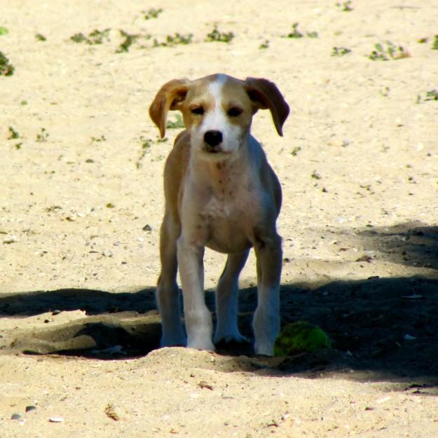 Rosie the Puppy. Maya was afraid of her. Typical.