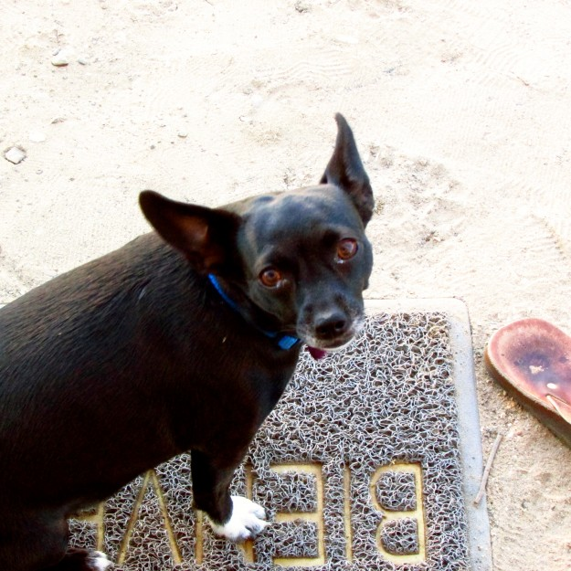 Luna begging to come into the camper. I don't think so, chica!